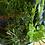 AlcheringaCottage_mixedfreshherbs_localproduce