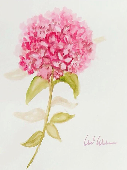 Pink hydrangea - Watercolor Greeting cards