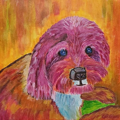 Labra Doodle Dog
