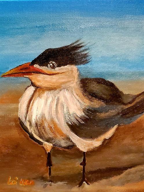 Left Tern