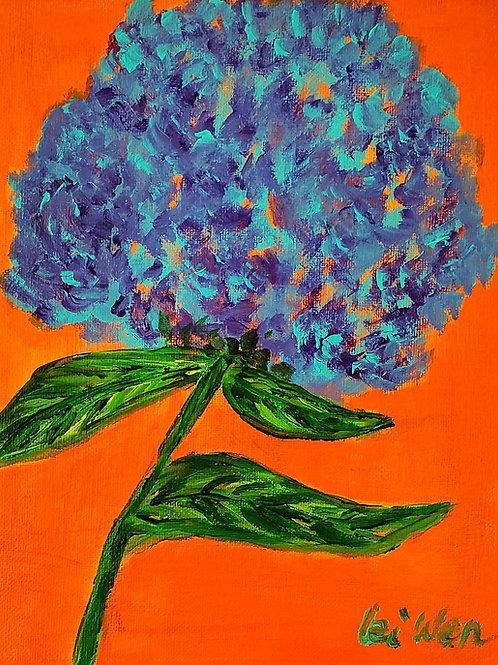 Ocean Blue Hydrangea