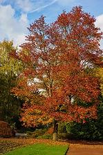 Bunter Garten, Mönchengladbach