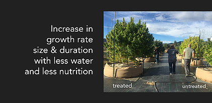 growth-rate-banner.webp