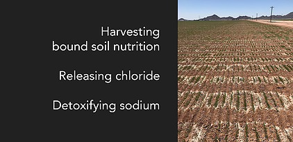 agronomy-detoxify-sodium-banner.webp