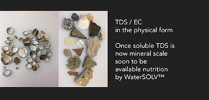 scale-nutrients-banner.webp