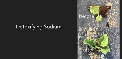 before-after-sodium-slide-banner-2.webp