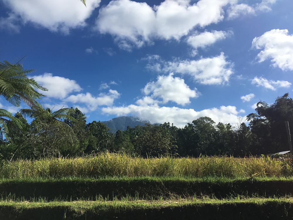 View of Mt. Batukaru, Bali