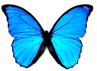 butterfly-png-25.png