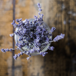 the smell of lavender is my favorite