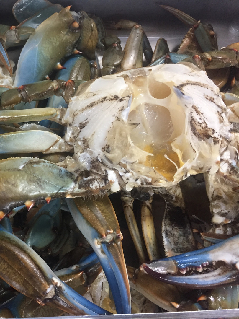 Fresh Mobile Bay Blue Crabs