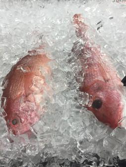 FreshFish Red Snapper