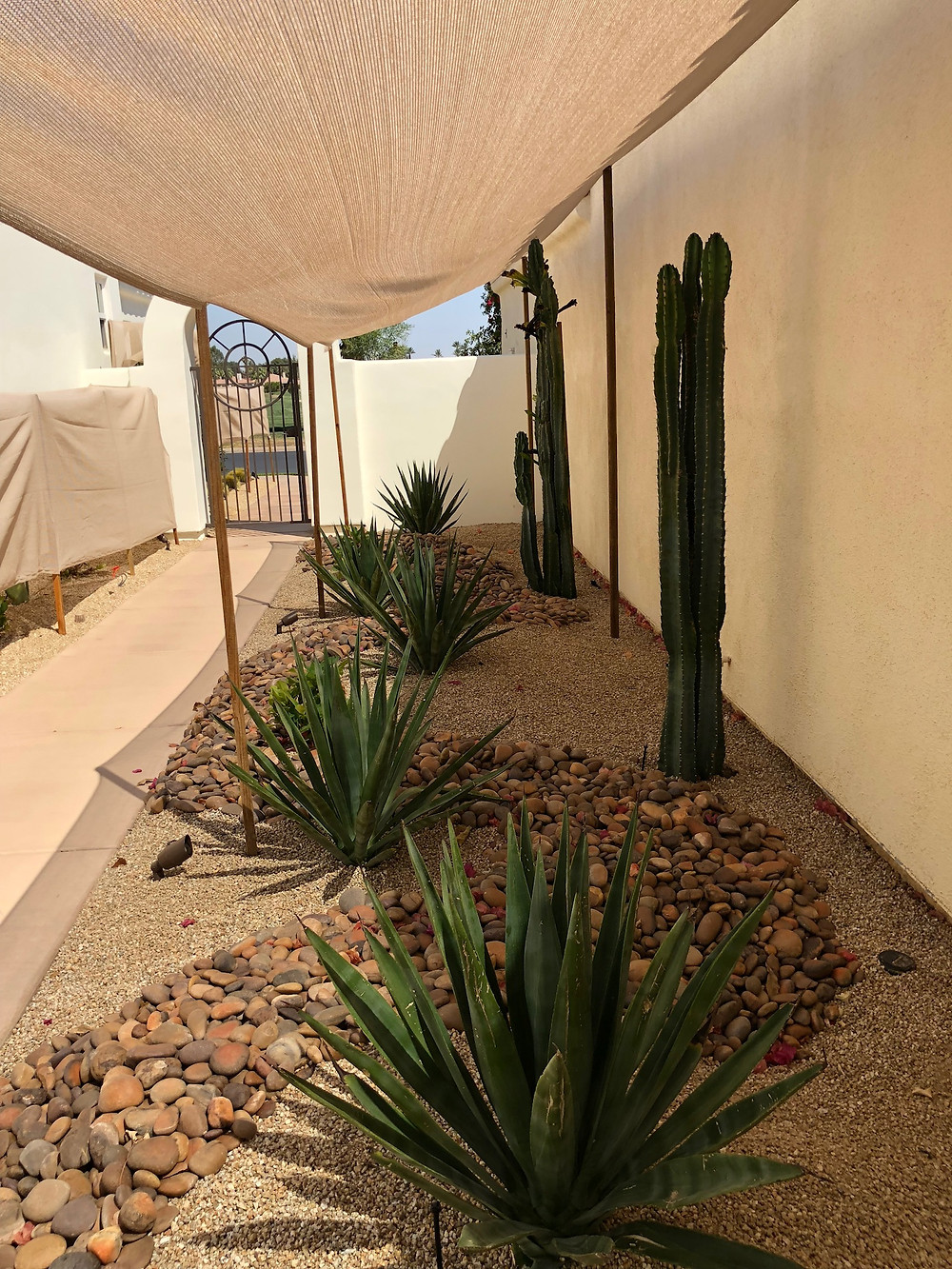 Newly planted agave and cactus under shade covers against a very hot wall