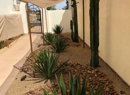 Protect Your Desert Plants from the Coachella Valley Heat!