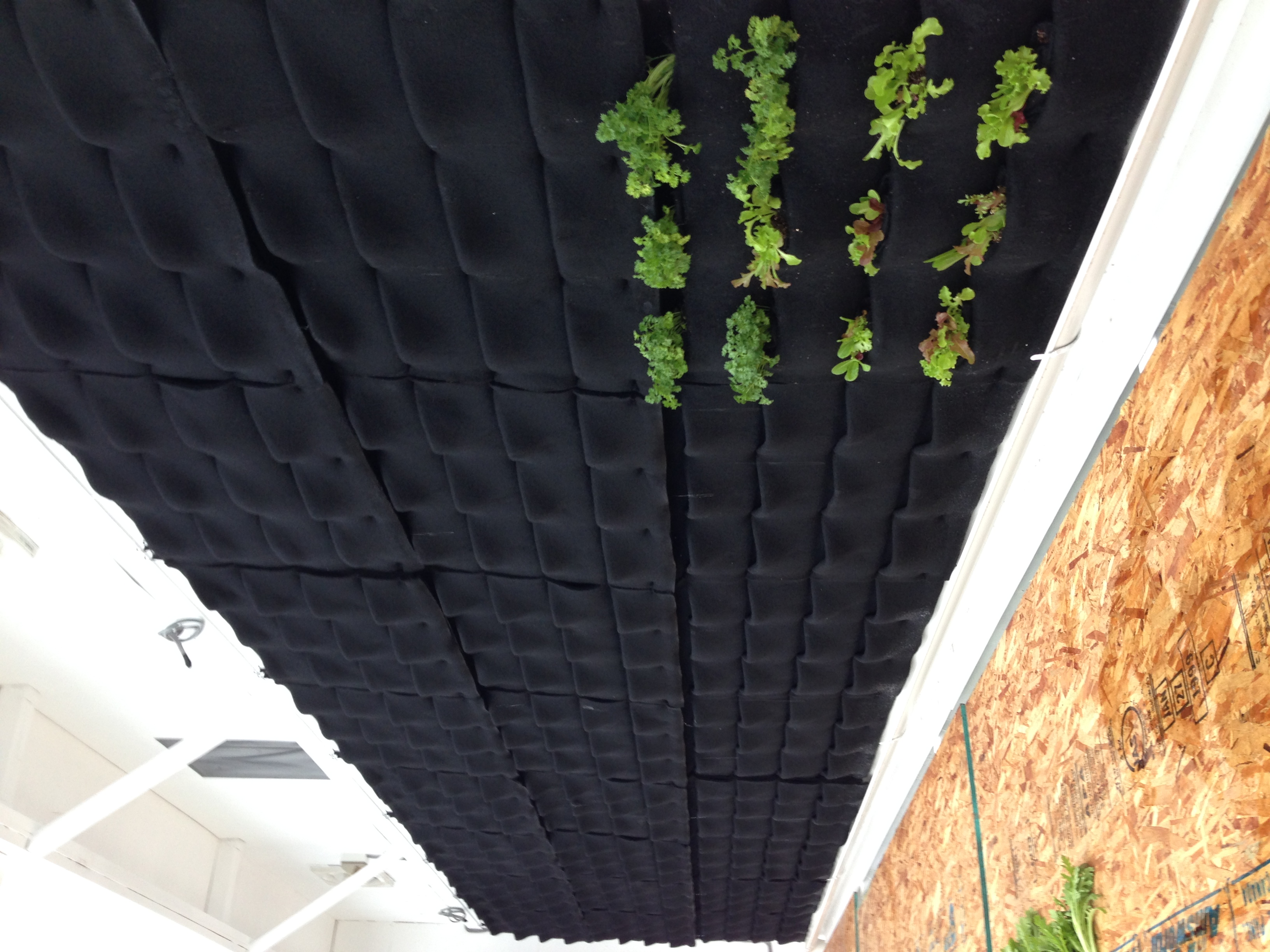Planting flora felt wall