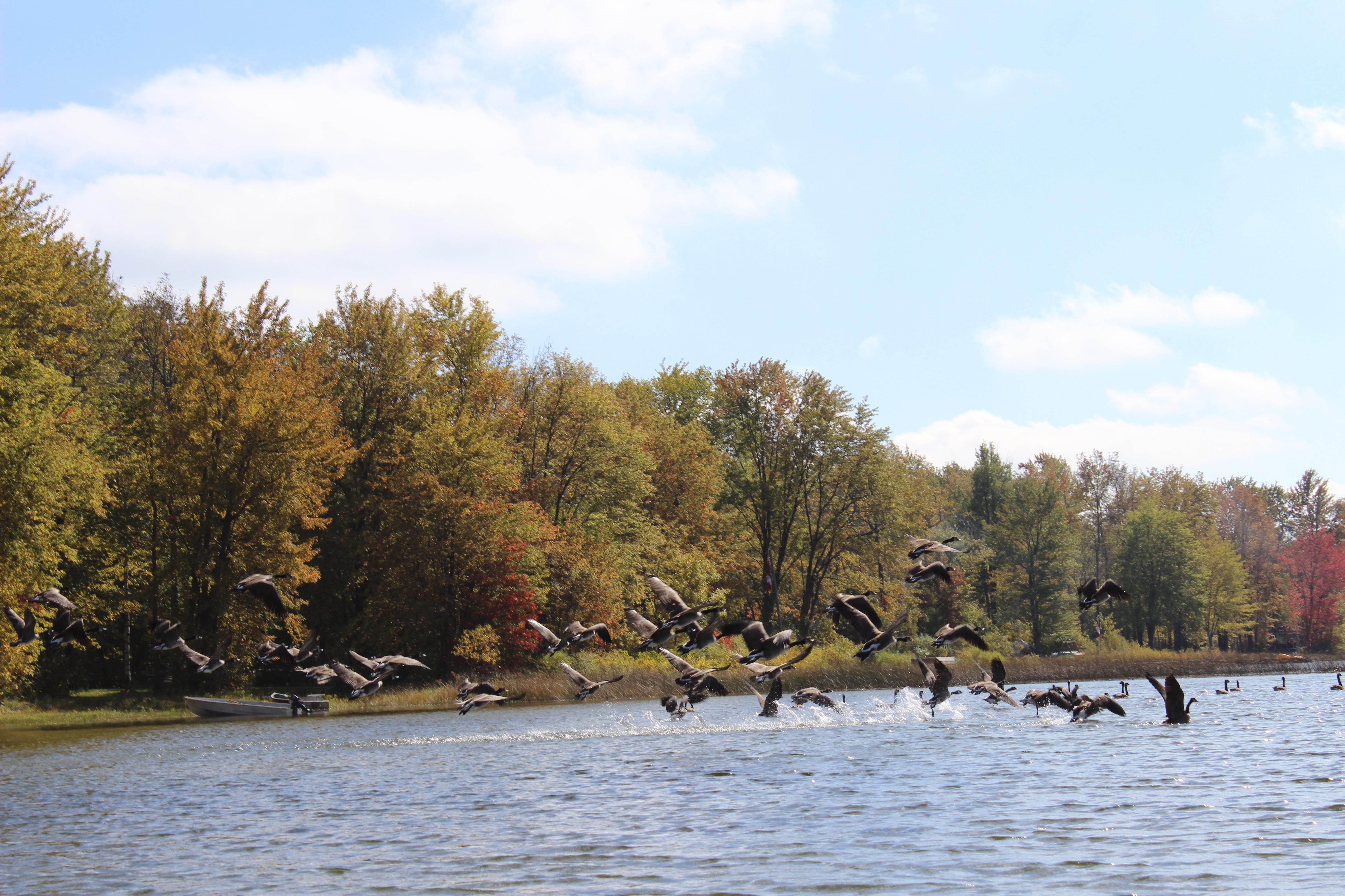 Young Lake