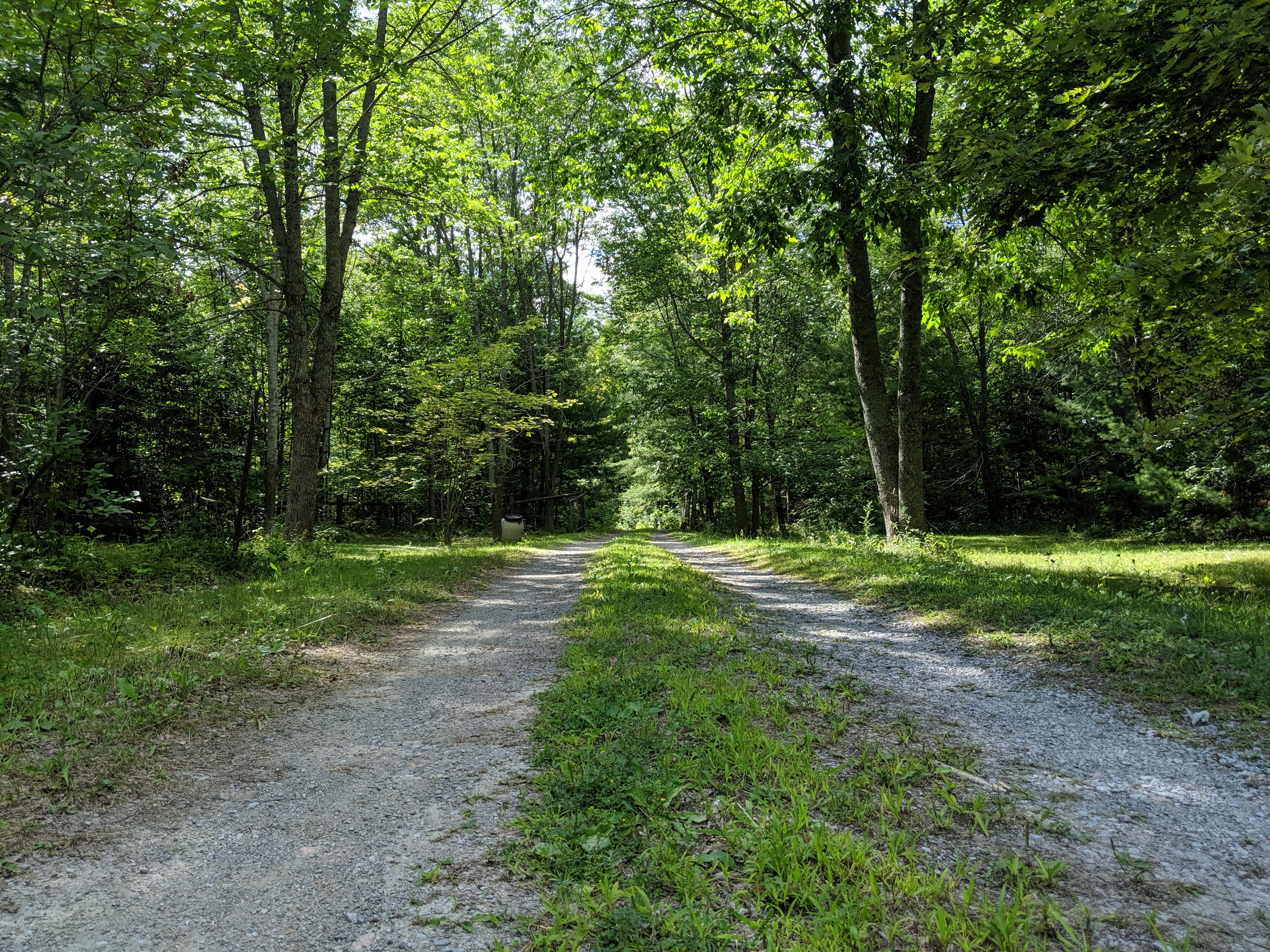 Our driveway to our private forrest