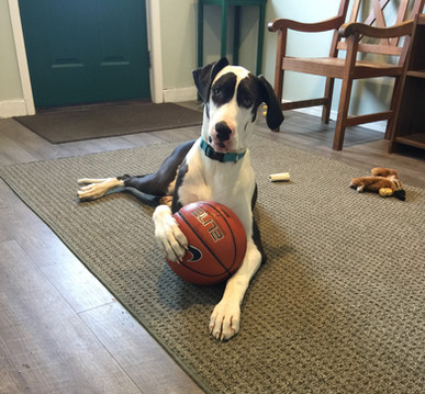 Lola Basketball.JPG