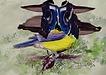 Modded Bird1.png