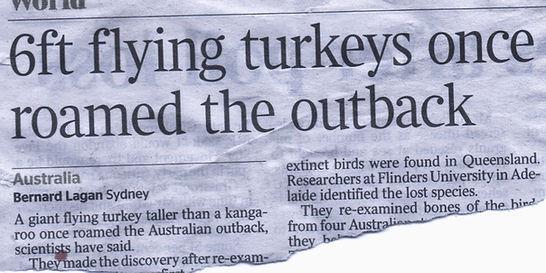 6ft Turkeys_edited_edited.jpg
