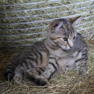 Schwangere Lilli
