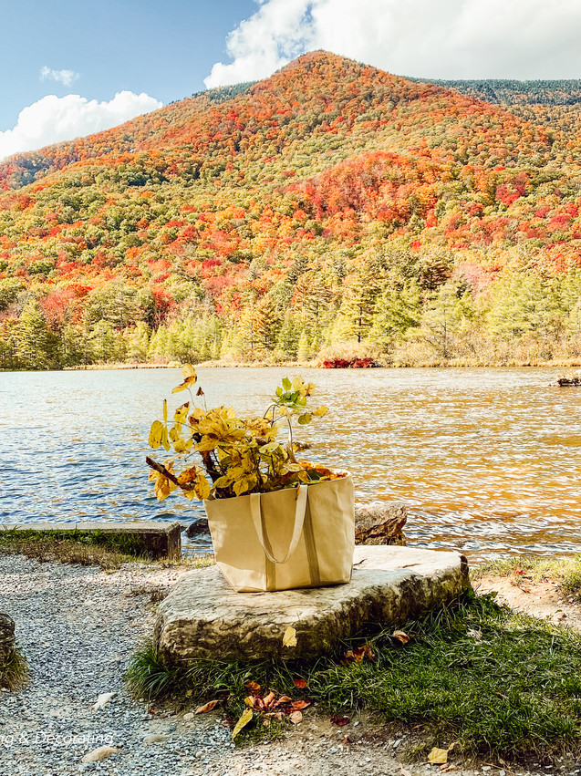 Hiking and Gathering for Natural Fall Elements