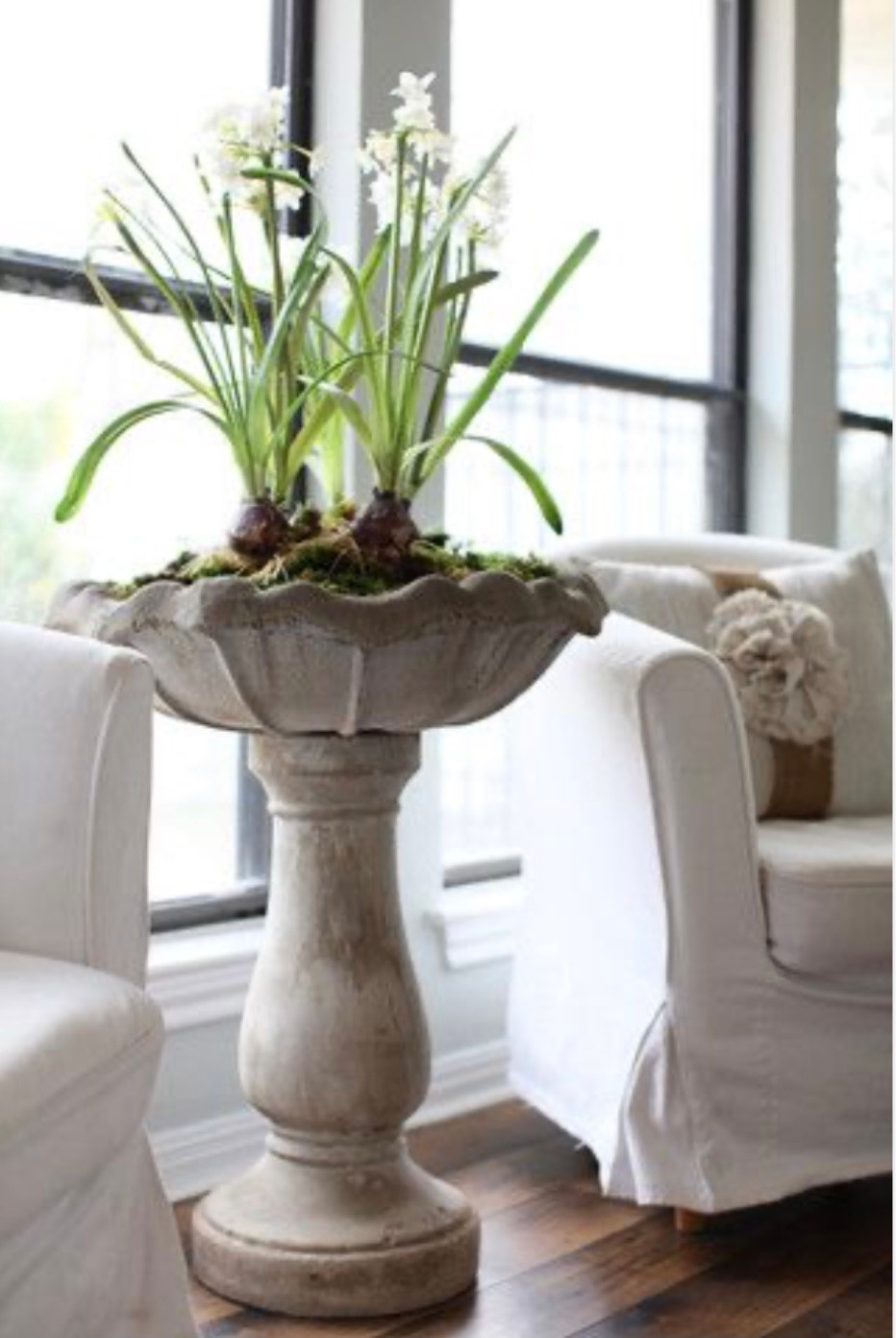 Winter Decorating with Paperwhites