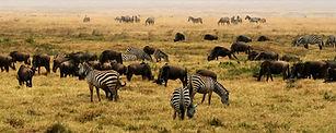 NgoroNgoro_Crater,_Tanzania,_Africa.jpg