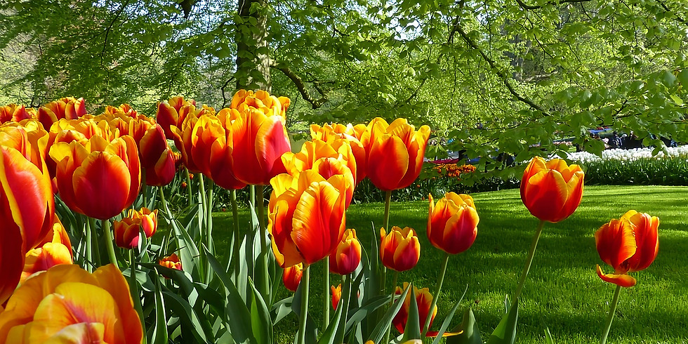 FREE Webinar: Jewels of the Rhine with Tulips & Lucerne