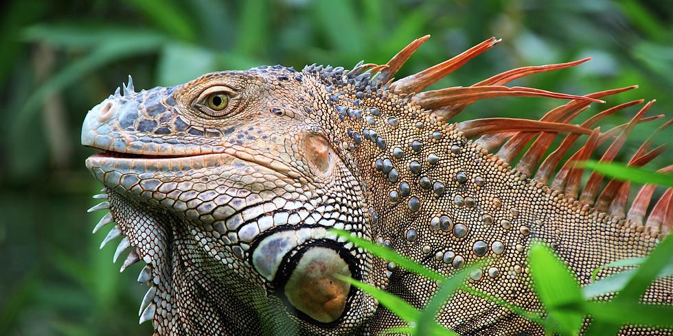 POSTPONED: Costa Rica - Tropical Paradise