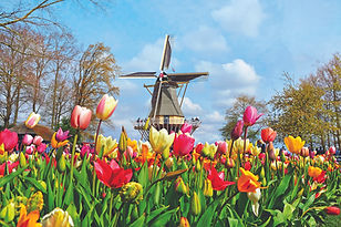 Keukenhof Gardens Windmill (from Mayflow