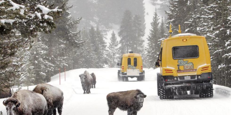 FREE Online presentation: Yellowstone in Winter by Snowcoach