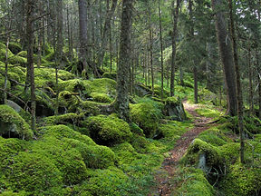 Great Smoky Mountains National Park (For