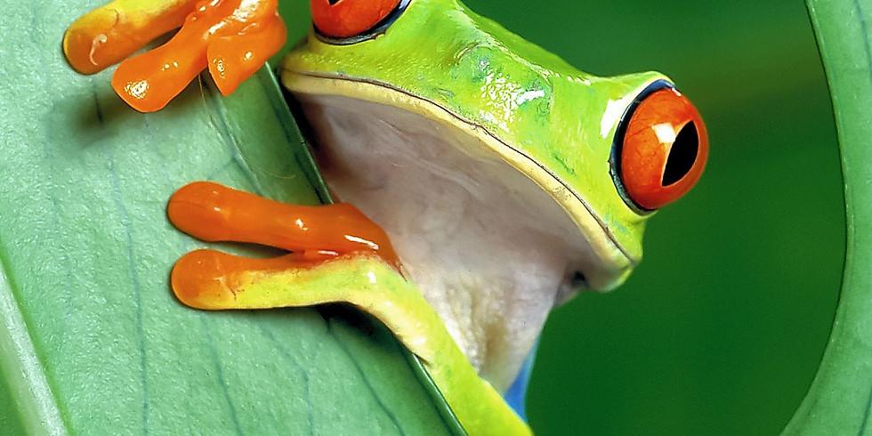 FREE Online Presentation: Costa Rica - Tropical Paradise