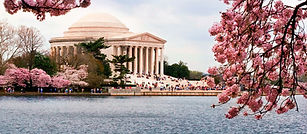 Jefferson Memorial Cherry Blossoms.jpg