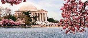 Jefferson Memorial Cherry Blossoms.jpg
