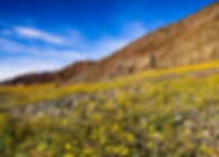 Desert Early Bloom by Marc Cooper.jpg