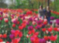 Keukenhof Gardens (from Mayflower).jpg