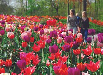 Keukenhof Gardens (from Mayflower).jpg