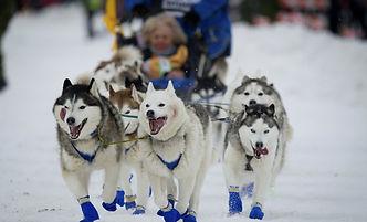 Iditarod.jpeg