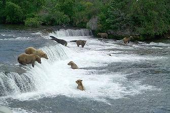 brown-bears-2119560__340.jpg