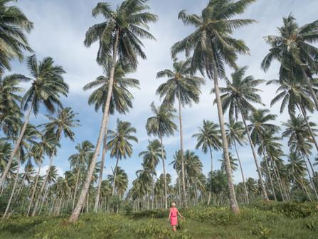 Samoa - Čo vidieť na Savaii za 5 dní (s mapou)