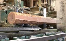 Scie a grumes, production locale avec du bois des vosges