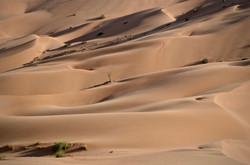 Curves of the Desert, Oman
