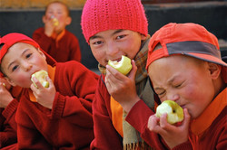 Apples for Lunch, Wakha Nunnery, Ladakh.