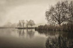 The Heath on a Misty Day