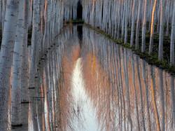 Magic Forest, Tuscany