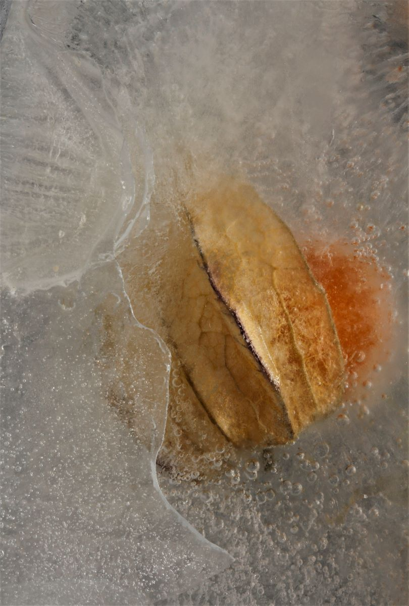 Physalis Case