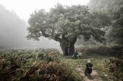 Hampstead Heath in Fog