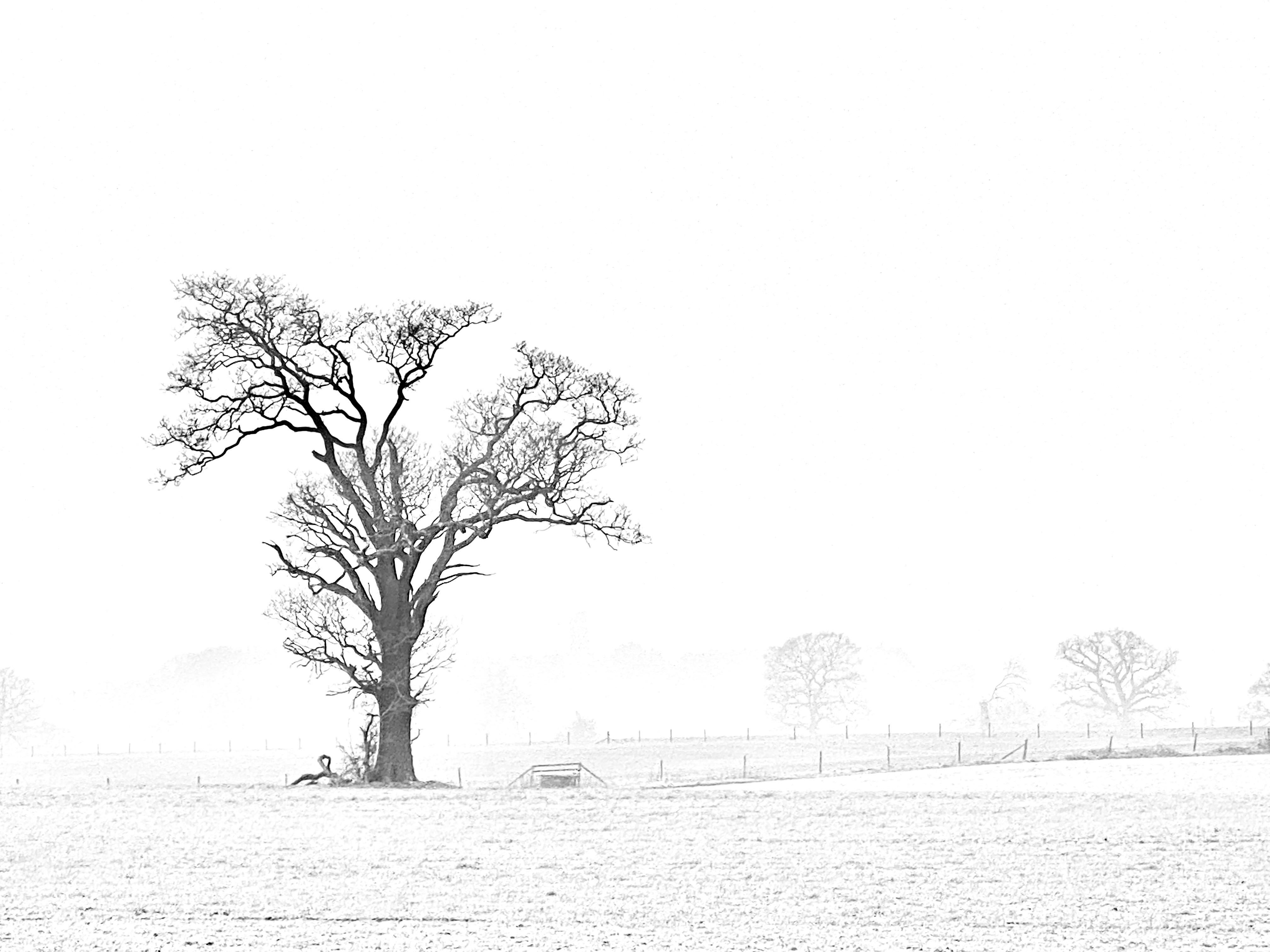 Winter adornments