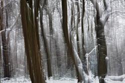 Camera as Paintbrush, Winter